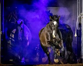 Bucking Horse Opening.jpg