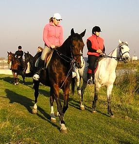 ture de turism ecvestru, turism ecvestru, plimbari calare pe cai de rasa, cursuri ecvestre, agrement si plimbari cu caii