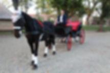 trasura, turism ecvestru, plimbari cu trasura, inchiriere caleasca trasa de cai, caleasca pentru nunti
