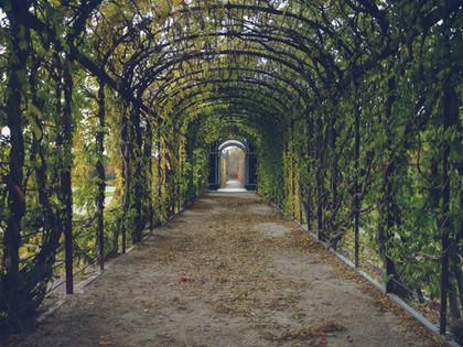The Key Elements for Your Secret Garden