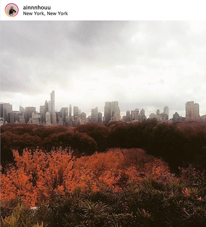Iris and B. Gerald Cantor Roof Garden: el skyline selvático de Nueva York