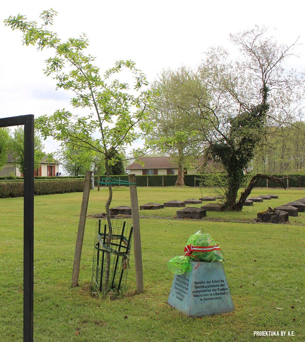 Retoño del Árbol de Gernika en el Campo de Gurs (Pirineo vasco-francés), foto de Ainhoa E.S. y Proiektuka.