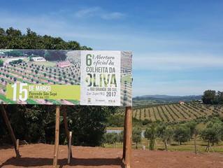 6ª Abertura Oficial da Colheita de Oliva no RS