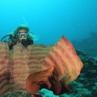 Scuba diver & underwater model