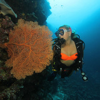 Hailey Winslow scuba diver & underwater model