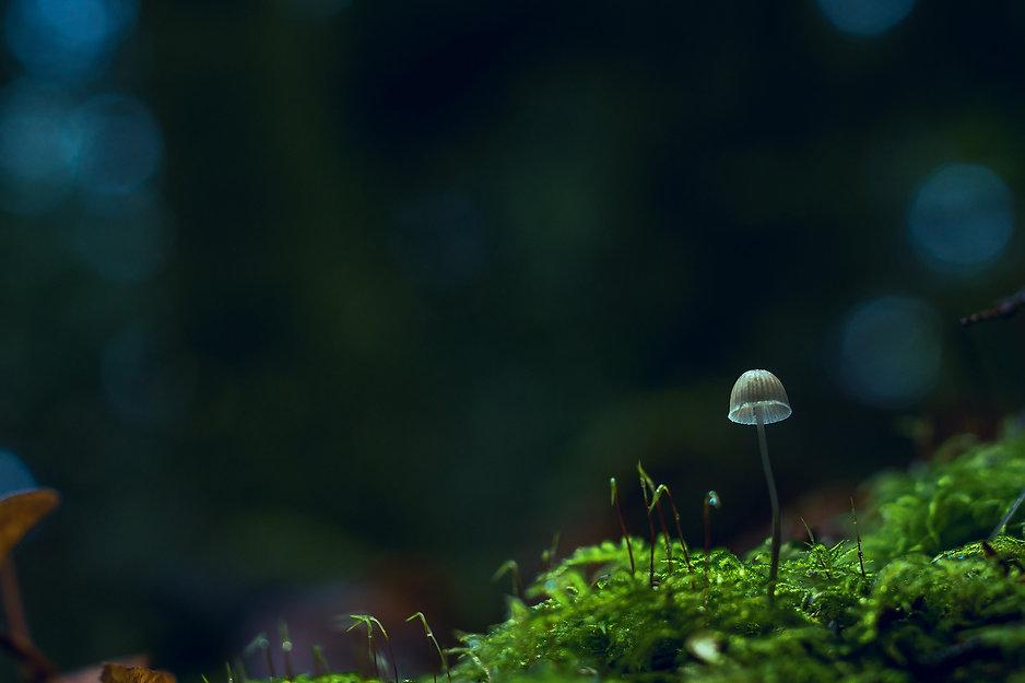 Little Mushroom.jpg
