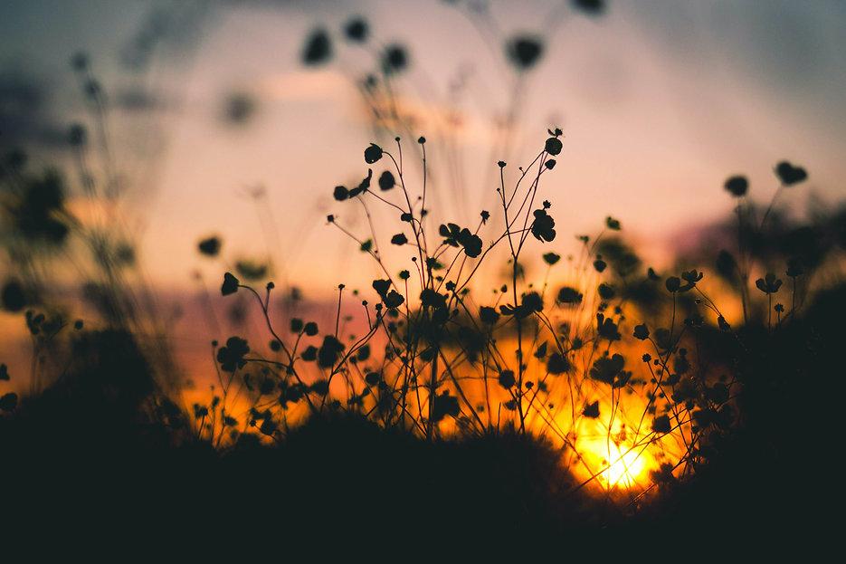 Flower Sunset Texture.jpg