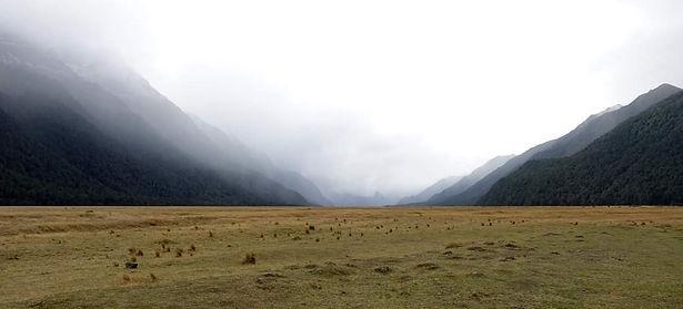 Hunting Programs New Zealand