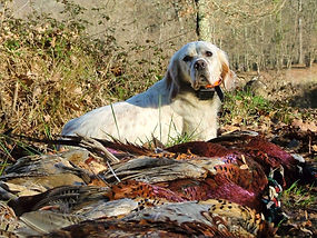 Hunting Programs France