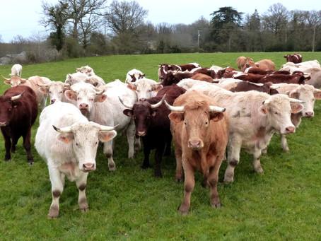 Besoins et attentes des éleveur.euses allaitants