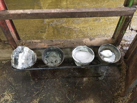 L'astuce de Juin : Complémentation minérale des vaches laitières sans prise de tête !