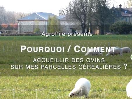Vidéos Pourquoi - Comment sur les partenariats céréaliers - éleveurs