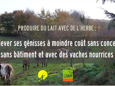 Vidéo #3 : Génisses sans concentré avec des vaches nourrices