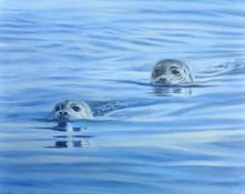 Hello Harbor Seals