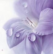 Lilac Freesia