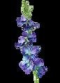 ZSO009-BL-Blue-Delphinium-Orchid.progres