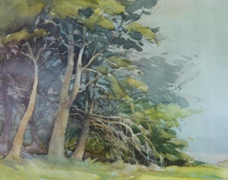 Monterey Pines at Asilomar, Watercolor,
