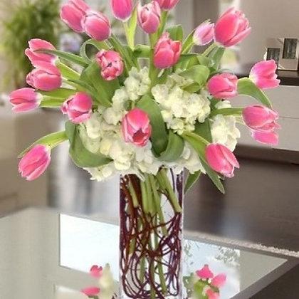 Tulip Beauty