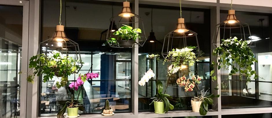 5 סיבות להכניס צמחייה טבעית למשרד