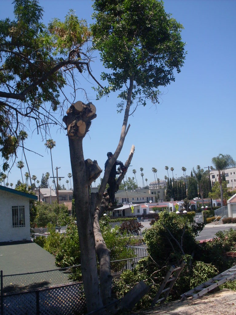 Tree Cutting and Removal