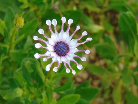 beauty-of-flower-3698805_1280.jpg