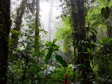 Santa_Elena_Cloud_Forest_Reserve.jpg
