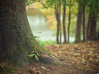 If a leaf falls, do you stick it back on?