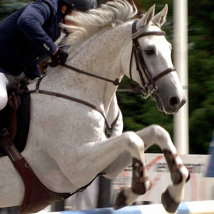 Romandie Horse Show