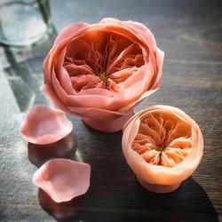 Bean paste craft flower, stay tune for more updates! #beanpasteflower  #julietrose #rose #handmadefl