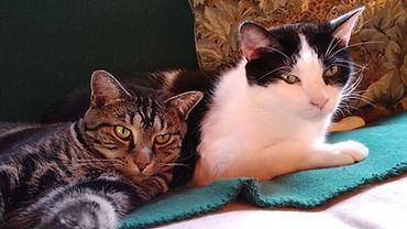 Nikko & Minky.jpg
