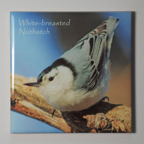 Ceramic Coaster or Trivet - Whitebreasted Nuthatch