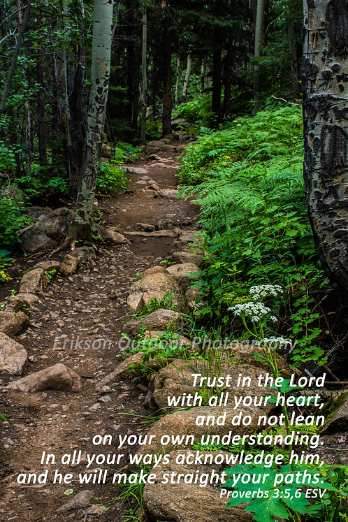 Scripture Proverbs 3:5,6 | English or Spanish | Cards and Prints