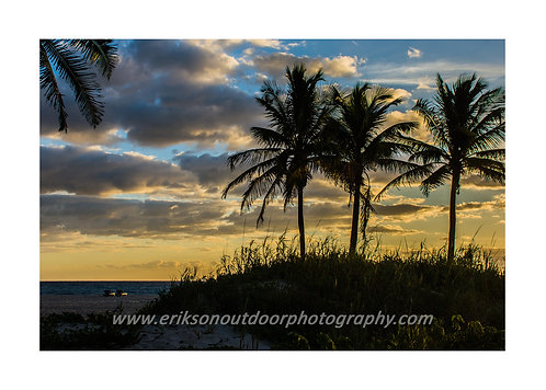 Singer Island Palm Trees #2, Cards and Prints