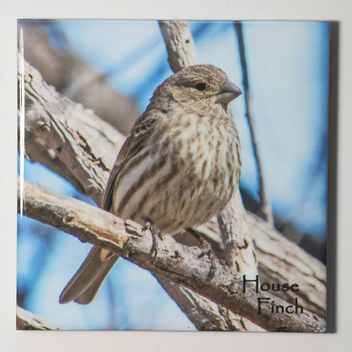 Ceramic Coaster or Trivet - House Finch - female