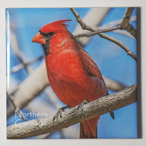 Ceramic Coaster or Trivet - Northern Cardinal - male #4