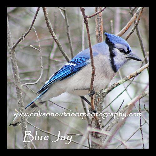Wooden Coaster - Blue Jay