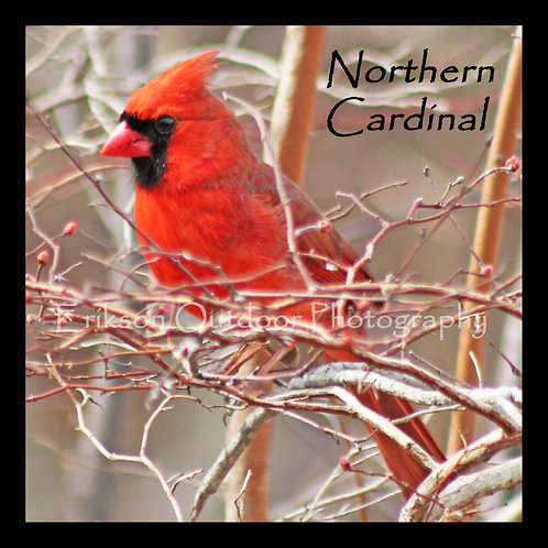 Wooden Coaster - Northern Cardinal - male #3