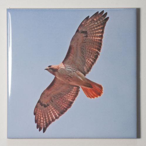 Ceramic Coaster or Trivet - Redtail Hawk