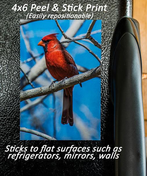 Peel&Stick DSC_5177.jpg