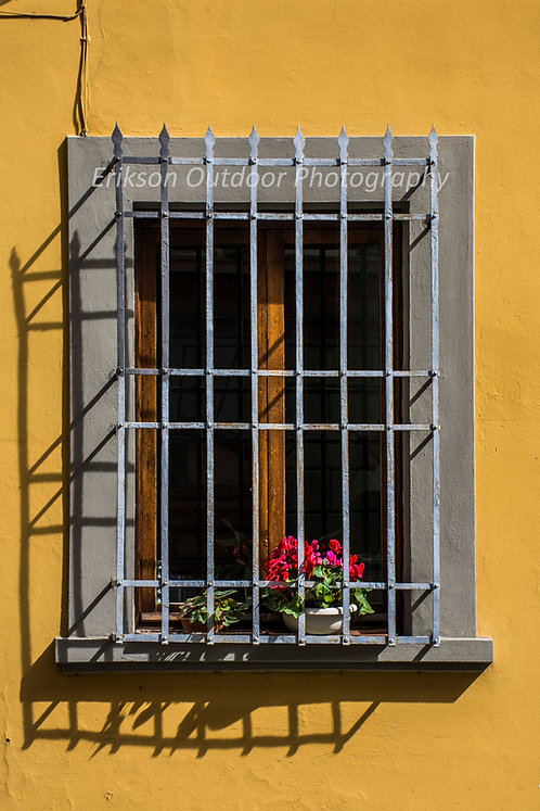 Window & Flowers #4, Florence, Italy, Cards and Prints