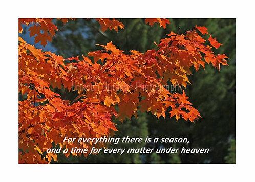 ESV Scripture greeting cards, Ecclesiastes 3:1