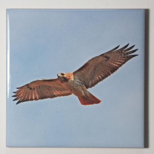 Ceramic Coaster or Trivet - Redtail Hawk #2