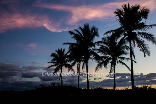 Palm Trees at Sunrise, Cards and Prints