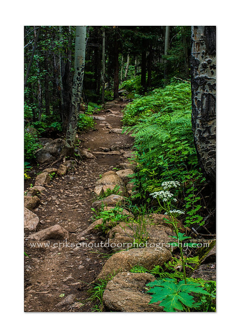 Cub Lake Trail, Rocky Mountains, CO, Cards and Prints