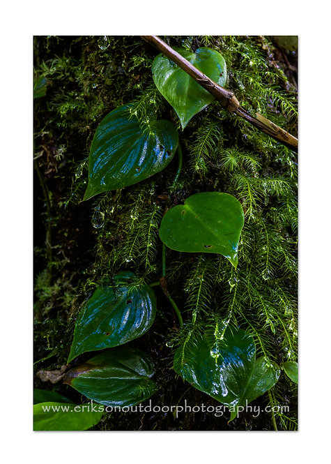 Moss & Vine, Cards and Prints