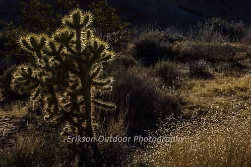 Cholla Cactus, Cards and Prints