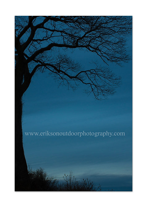 Tree At Civil Twilight, Cards and Prints