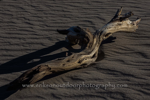 Dead Wood in Death Valley, Cards and Prints