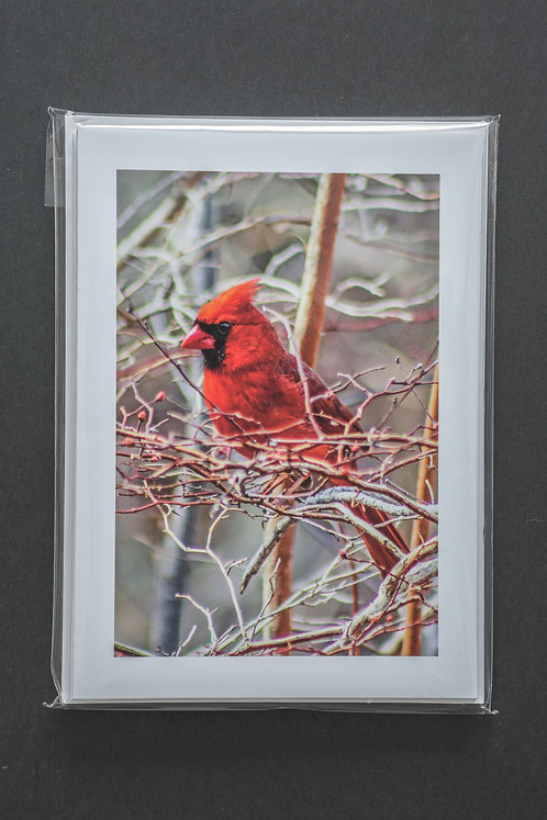 Greeting Card Gift Set, 2 copies each of 3 Northern Cardinal images