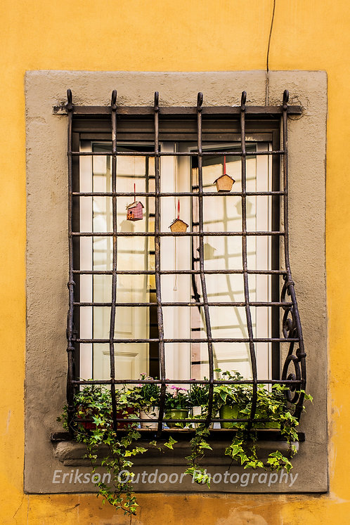 Window & Flowers #5, Florence, Italy, Cards and Prints